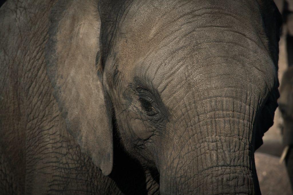 elephant-670645_1280